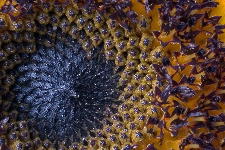 Fibonaccis, The - Repressed: The Best Of The Fibonaccis 1981-1987