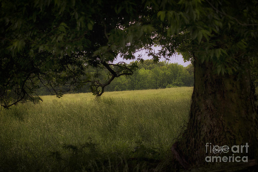 Field Of Dreams II Photograph  - Field Of Dreams II Fine Art Print