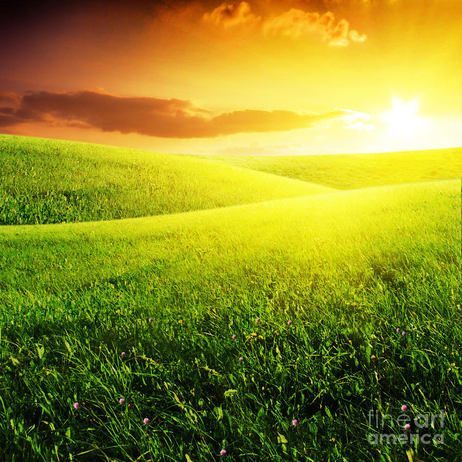 Field Of Grass And Sunset Photograph