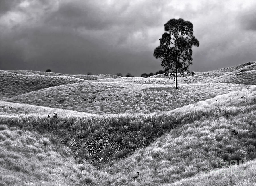 Field Of Saddle Road Dreams Photograph
