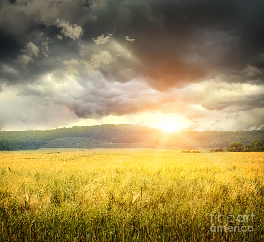Field Of Wheat With Ominous Clouds  Photograph  - Field Of Wheat With Ominous Clouds  Fine Art Print