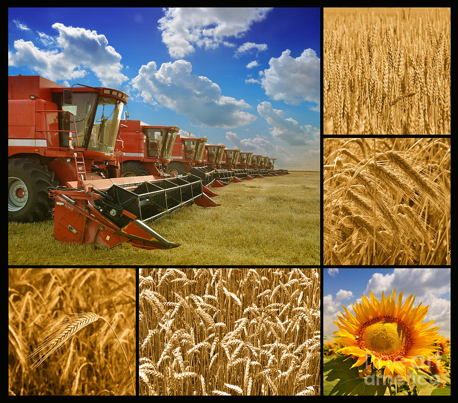 Fields And Grain Collage Photograph