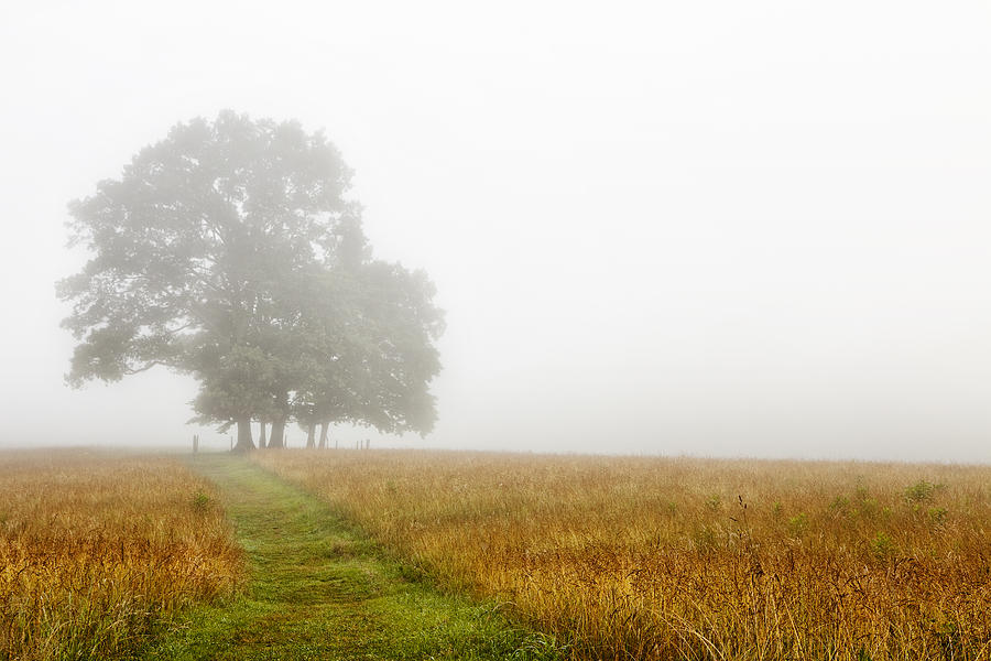 Fields In The Fog Photograph