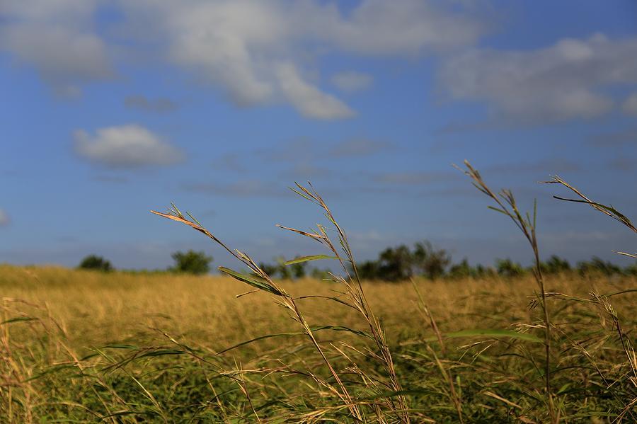 Fields Photograph