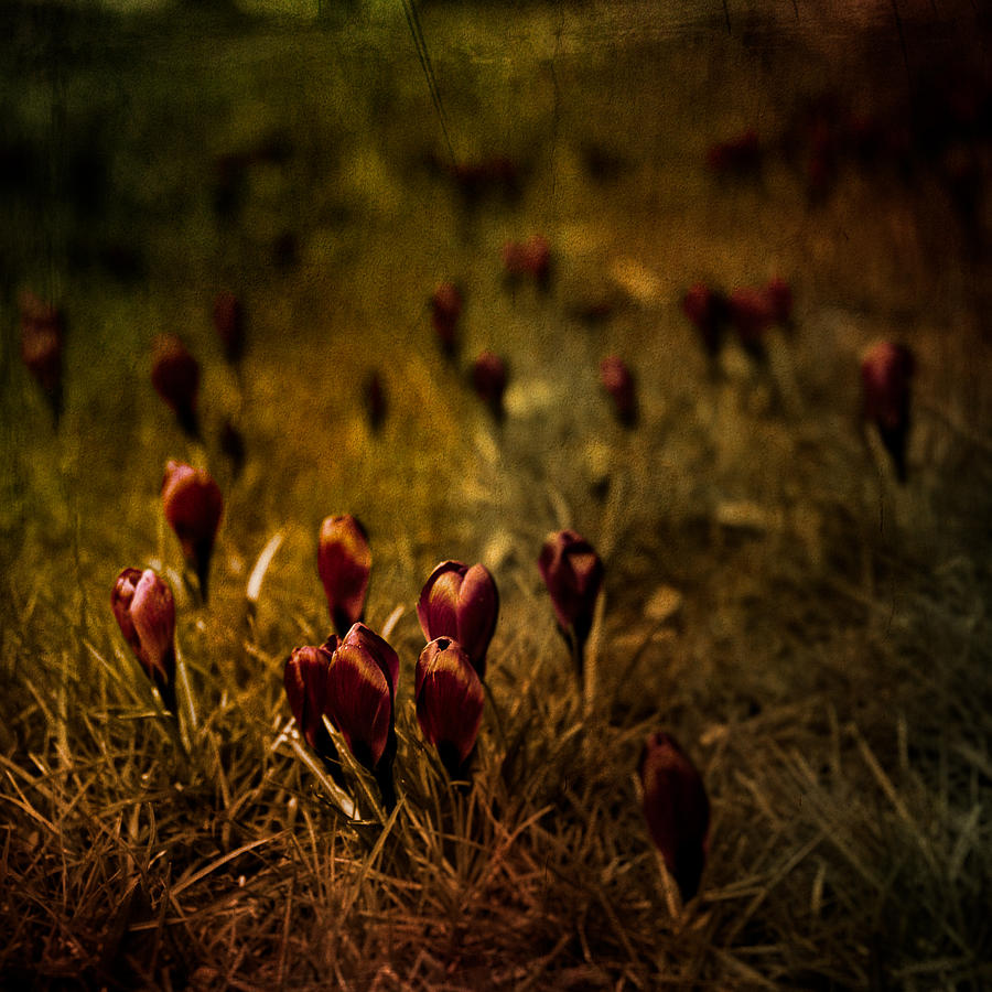 Fields Of Elegance Photograph