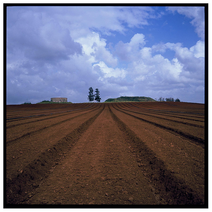 Fields Of Hod Hasharon Photograph