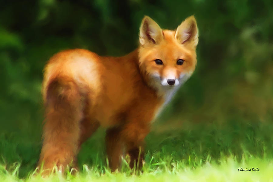 Fiery Fox Painting  - Fiery Fox Fine Art Print