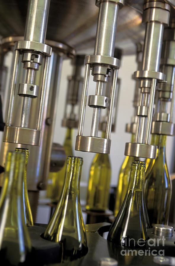 Filling Wine Bottles Photograph