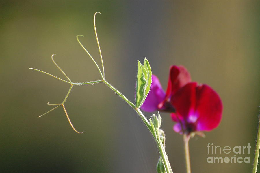 Finer Details Photograph