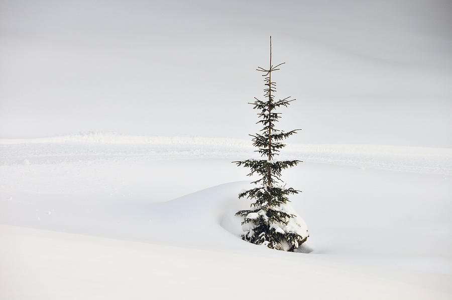 Fir Tree And Lots Of Snow In Winter Kleinwalsertal Austria Photograph