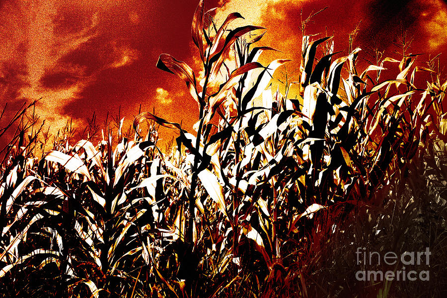 Fire In The Corn Field Photograph  - Fire In The Corn Field Fine Art Print