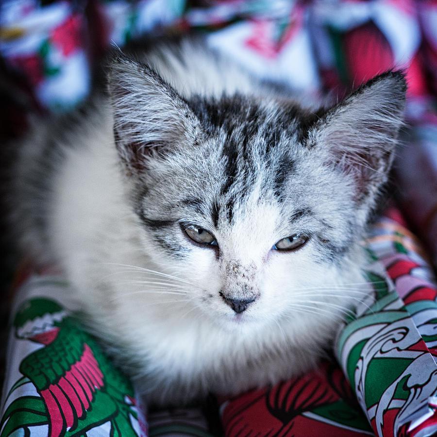 Kitten Photograph - Firecracker Kitten by Zoe Ferrie
