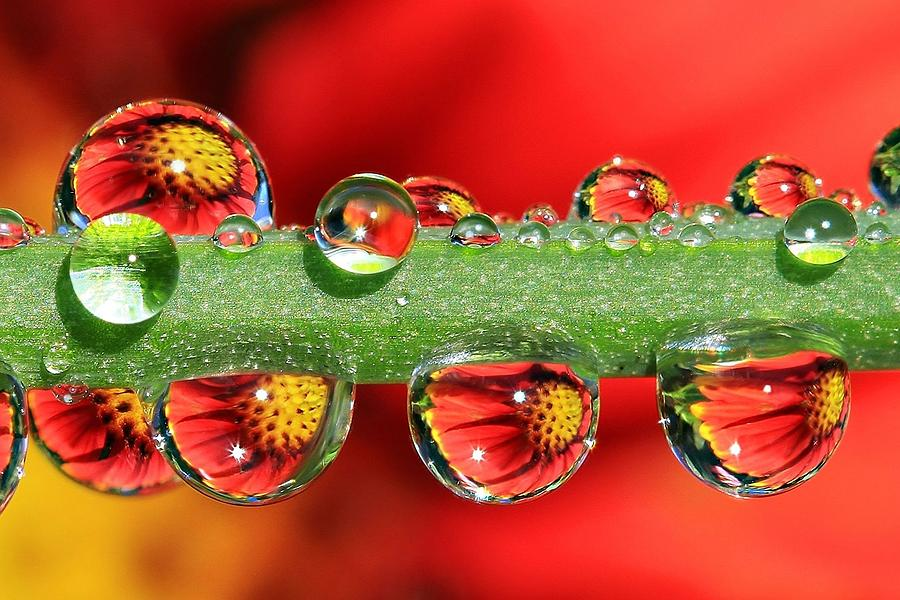 Water Drops Photograph - Firey Drops by Gary Yost