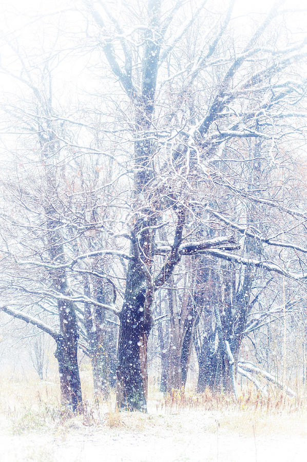 First Snow. Dreamy Wonderland Photograph  - First Snow. Dreamy Wonderland Fine Art Print