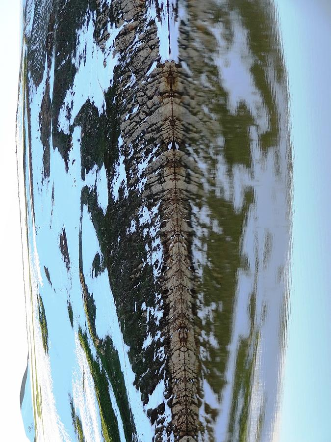 Fish Bones Water Reflection After Rotation Photograph