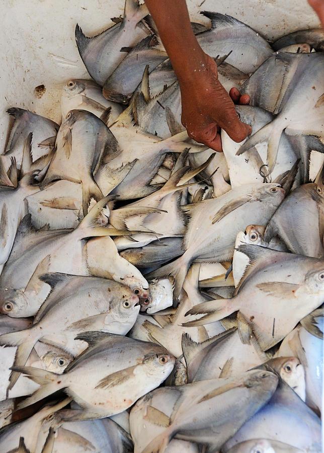 Fish Photograph - Fish Market by Money Sharma