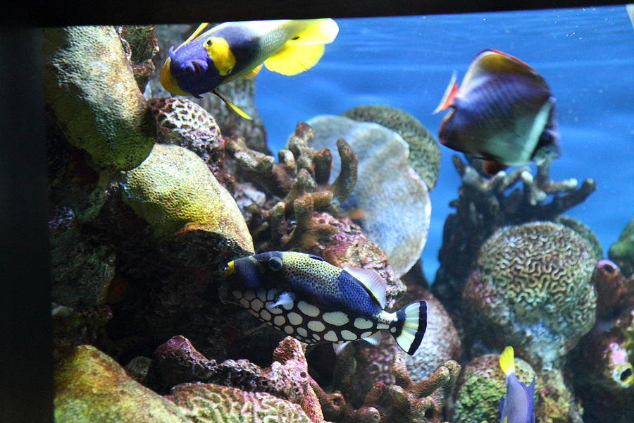 Fish National Aquarium In Baltimore Md 1212114 Photograph By Dc Photographer