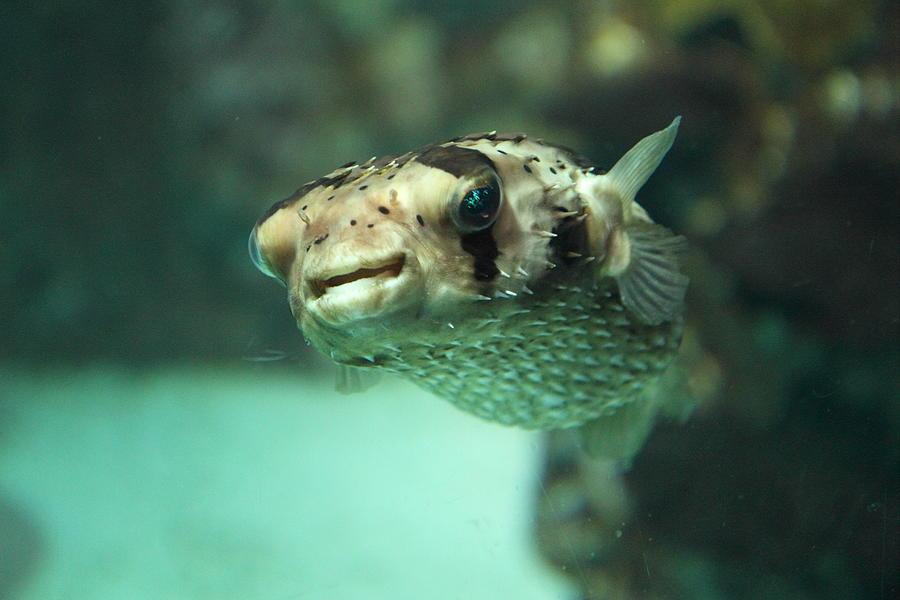 Fish - National Aquarium In Baltimore Md - 1212135 Photograph