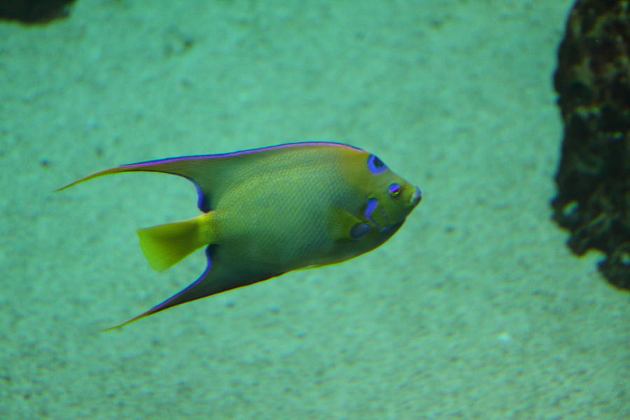 Fish national aquarium in baltimore md 1212139 for Maryland freshwater fish
