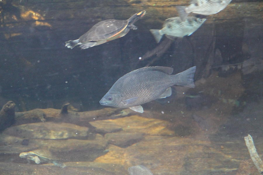 Fish national aquarium in baltimore md 1212146 for Maryland freshwater fish