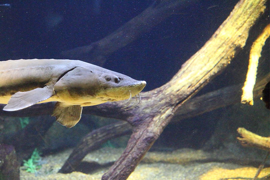 Fish national aquarium in baltimore md 121220 for Maryland freshwater fish