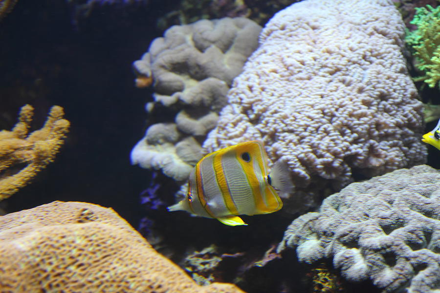 Fish national aquarium in baltimore md 121240 for Maryland freshwater fish