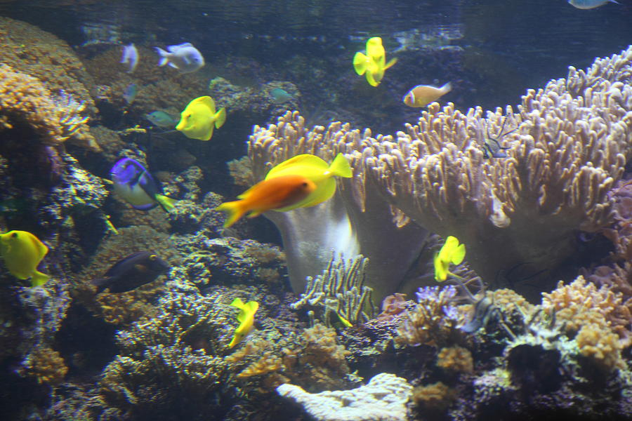 Fish National Aquarium In Baltimore Md 121245 Photograph By Dc Photographer