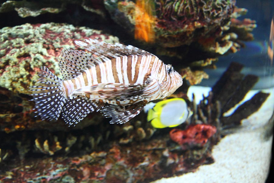 Fish national aquarium in baltimore md 121274 for Maryland freshwater fish