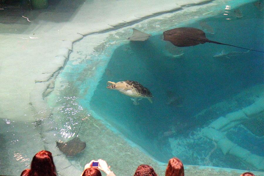 National Aquarium Baltimore Images Frompo