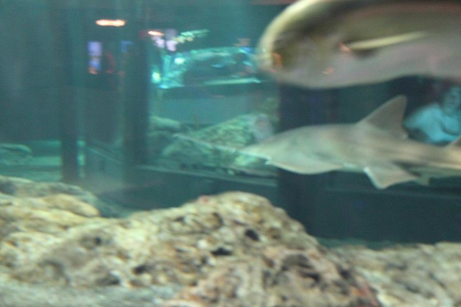 Fish national aquarium in baltimore md 121285 Aquarium in baltimore