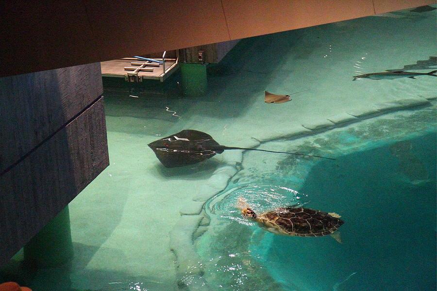 Plymouth aquarium coupon