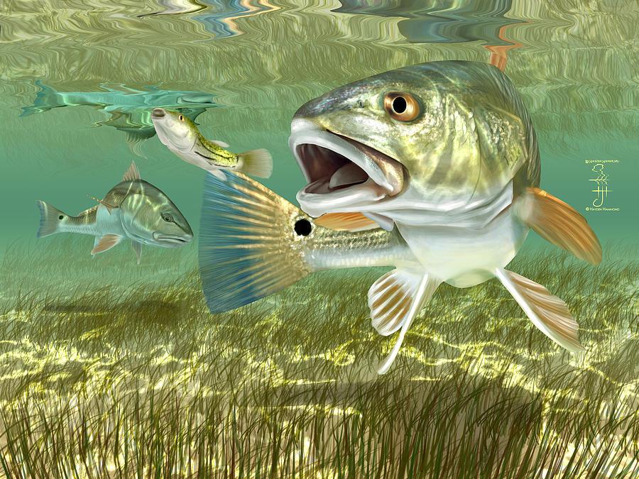 Guy Harvey Redfish Wallpaper