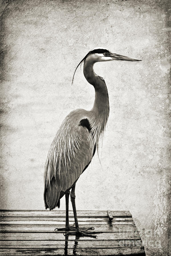 Heron Photograph - Fishing From The Dock by Scott Pellegrin