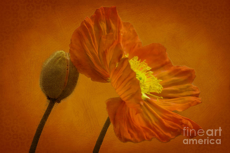 Flaming Beauty Photograph  - Flaming Beauty Fine Art Print