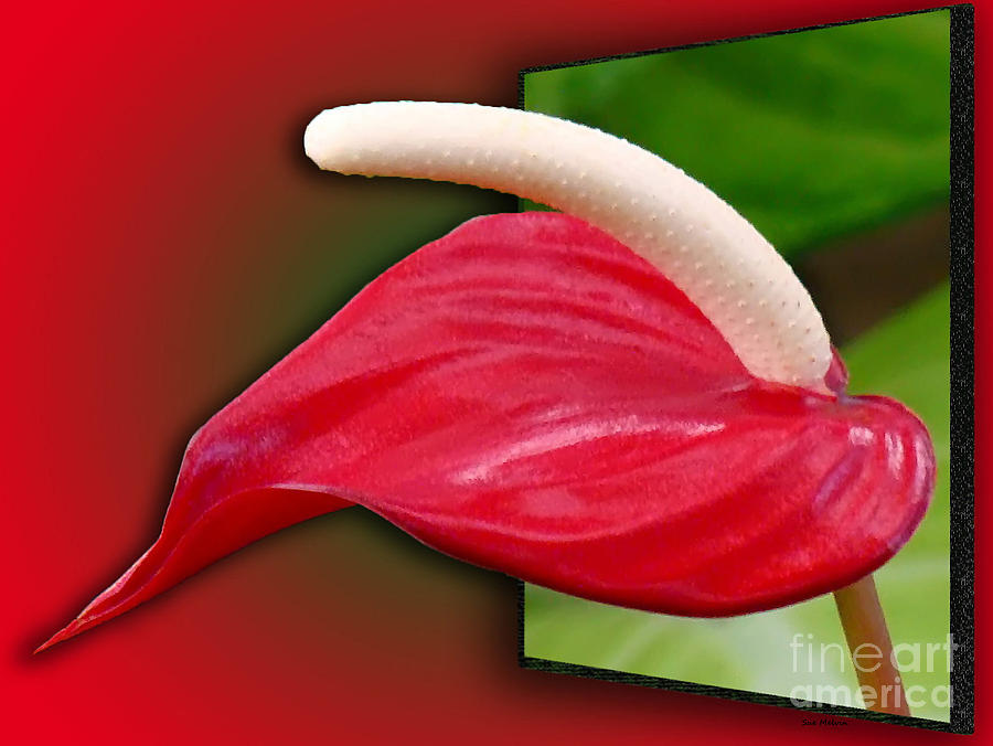 Flamingo Flower Passion Digital Art