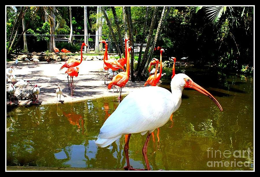 Flamingo Park Florida Photograph  - Flamingo Park Florida Fine Art Print