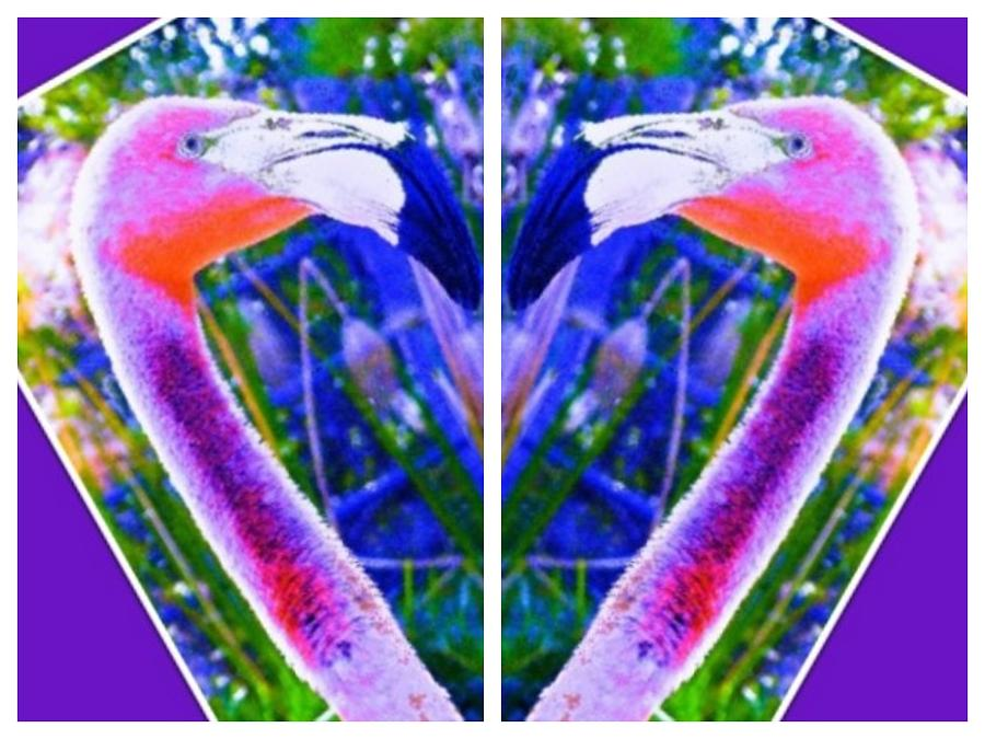 Flamingos Heart Photograph
