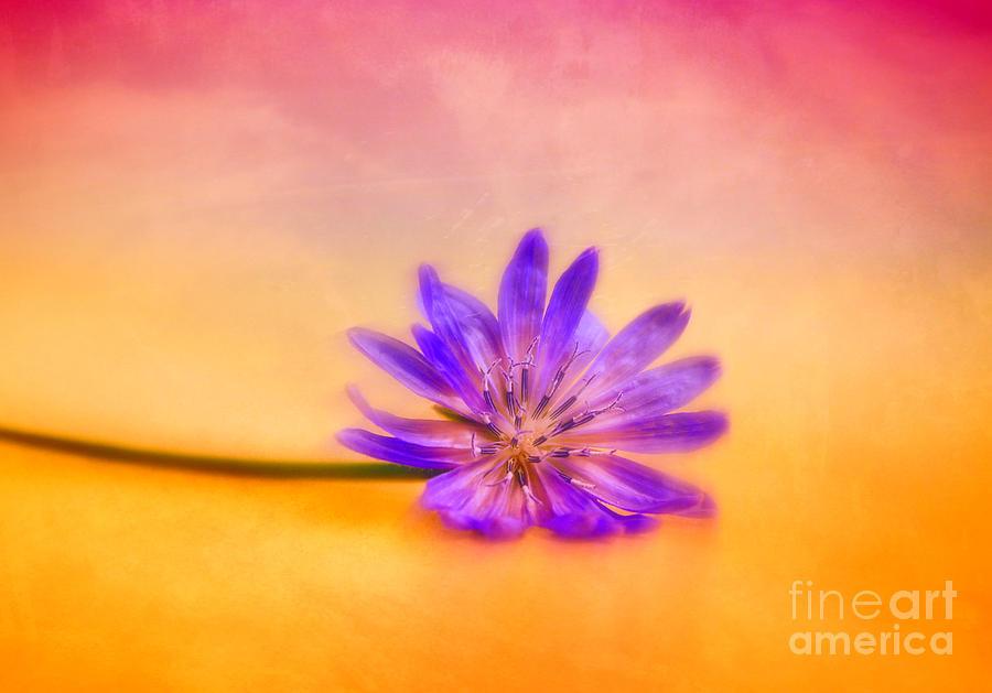 Fleur 2 Photograph