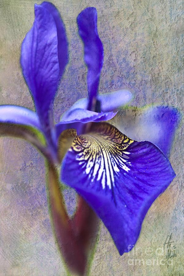 Fleur-de-lys Photograph