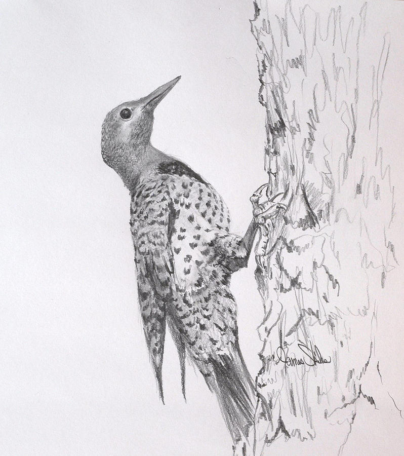Flicker Drawing  - Flicker Fine Art Print