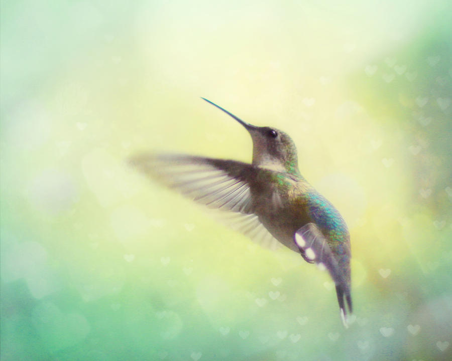 Flight Of Fancy Photograph  - Flight Of Fancy Fine Art Print