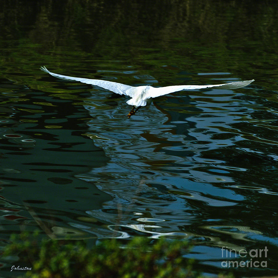 Flight Of The Egret Painting