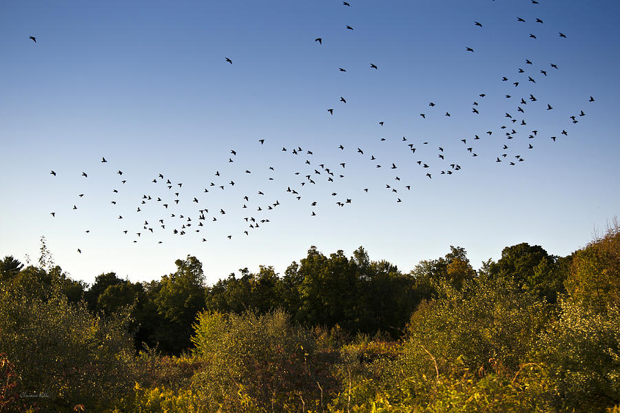 Flock Of Birds Over Autumn Country Landscape Photograph  - Flock Of Birds Over Autumn Country Landscape Fine Art Print