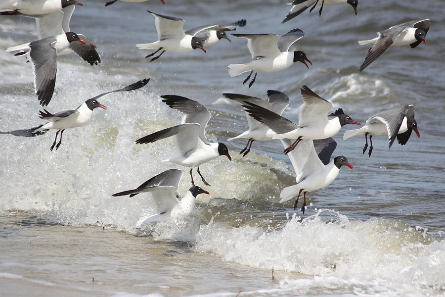 Flock of seagulls is a photograph by william joseph which was uploaded