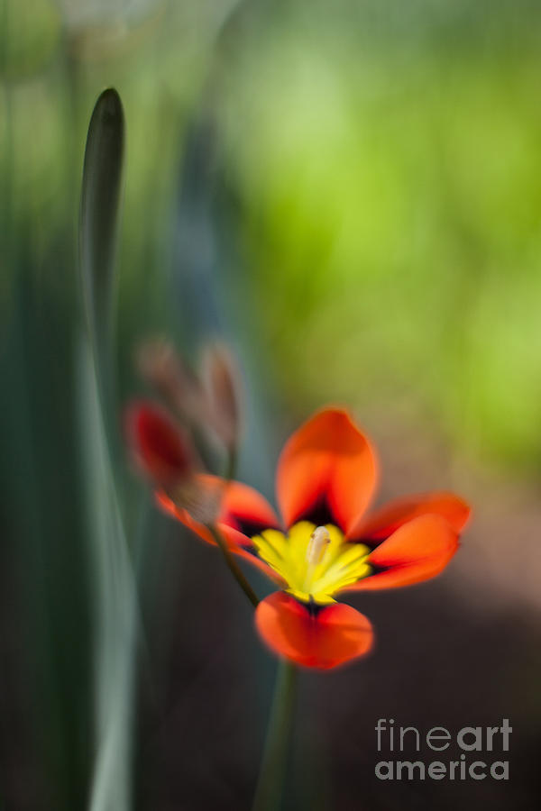 Flower Photograph - Flora Counterpoint by Mike Reid