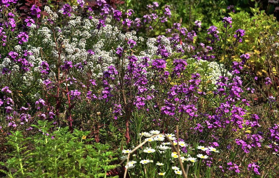 Flora Photograph