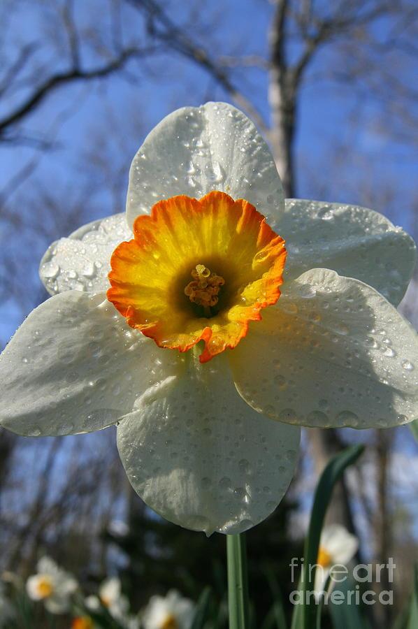Floral Dew  Photograph