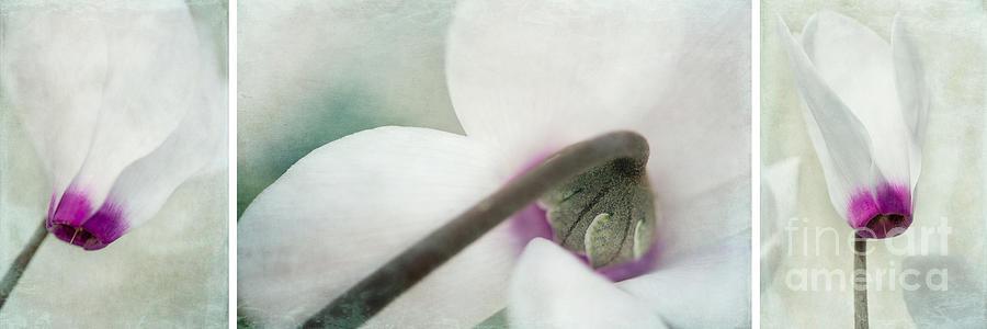 Floral Whites Photograph