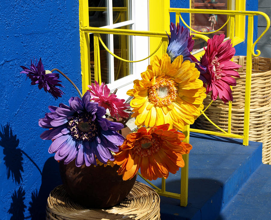 Flowers Photograph - Flores Colores by Gia Marie Houck