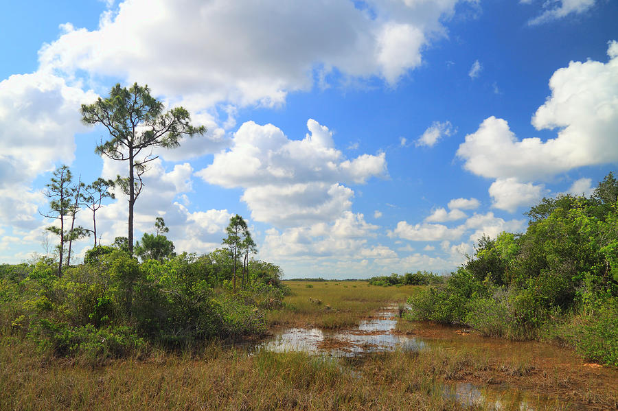 Florida Everglades Photograph